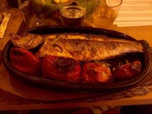 blog-fish